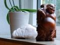 Qigong_Taichi_Yoga-Studio - Tao Institut - Dortmund, Raum-Fensterbank-Buddha+Orchidee